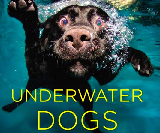Underwater Dogs Seth Casteel Book