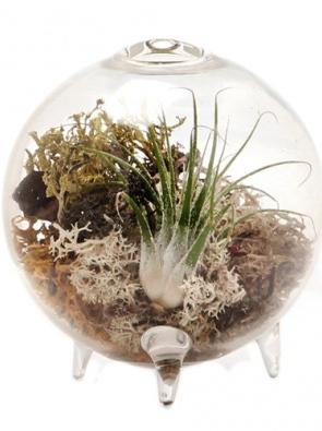 Terrarium Vase - Chive Designs